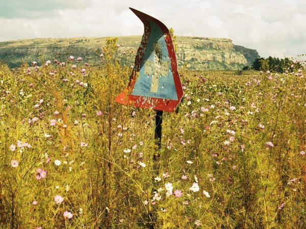 Jillian Edelstein Landscape